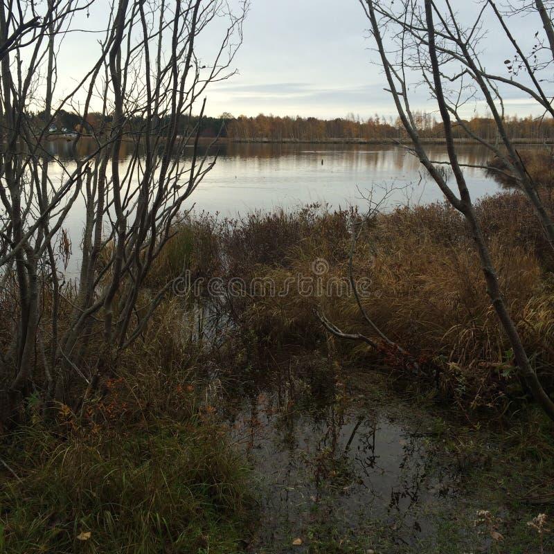 marshland immagini stock