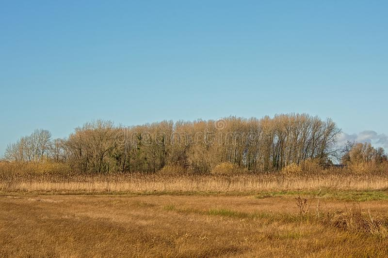 Sunny marsh landscape with meadows, bare trees and golden reed in autumn stock image