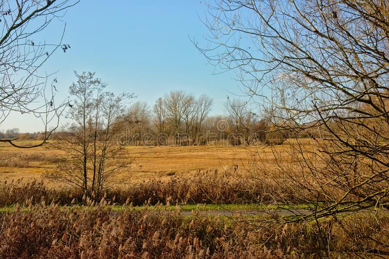Marshland with meadows, bare trees and reed on a sunny winterday royalty free stock photos