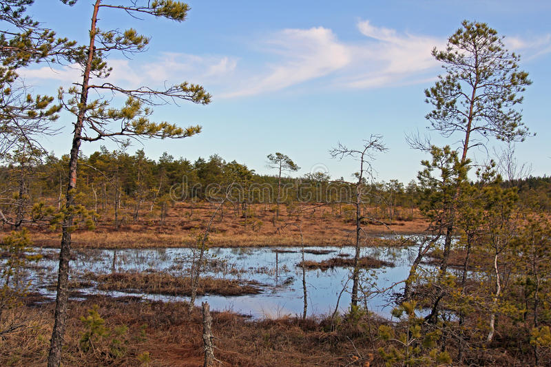 Marshland Scenery at Spring in Finland. A view to marshland with blue sky at spring. Photographed in Salo, Finland in April 2011 royalty free stock images