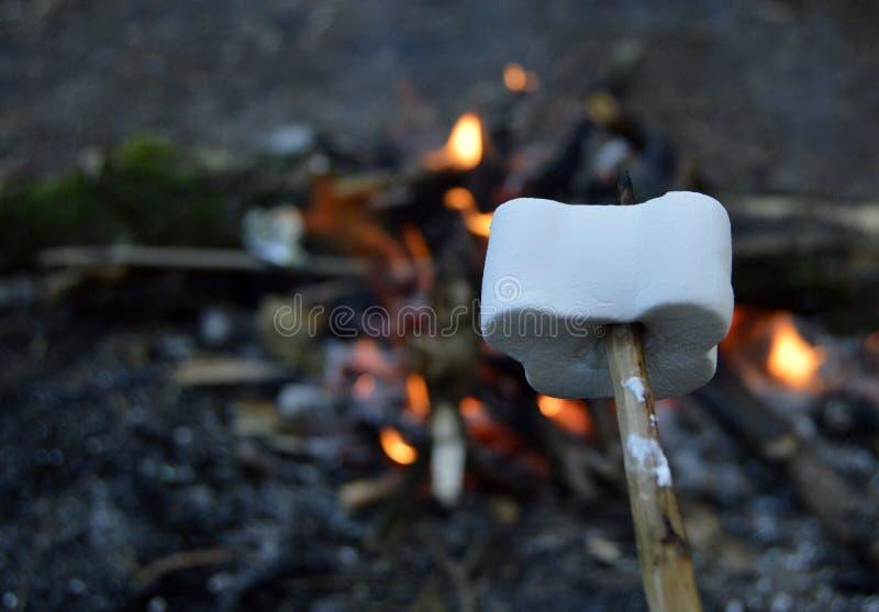 Marshmallow arkivfoton
