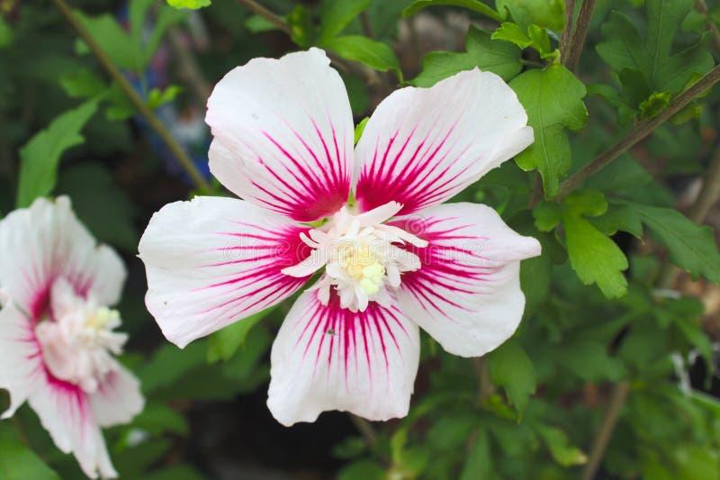 Marshmallow im Garten lizenzfreies stockbild
