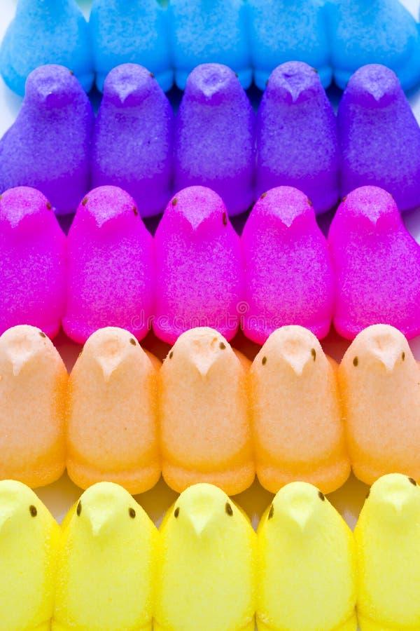 Marshmallow kurczątka fotografia stock