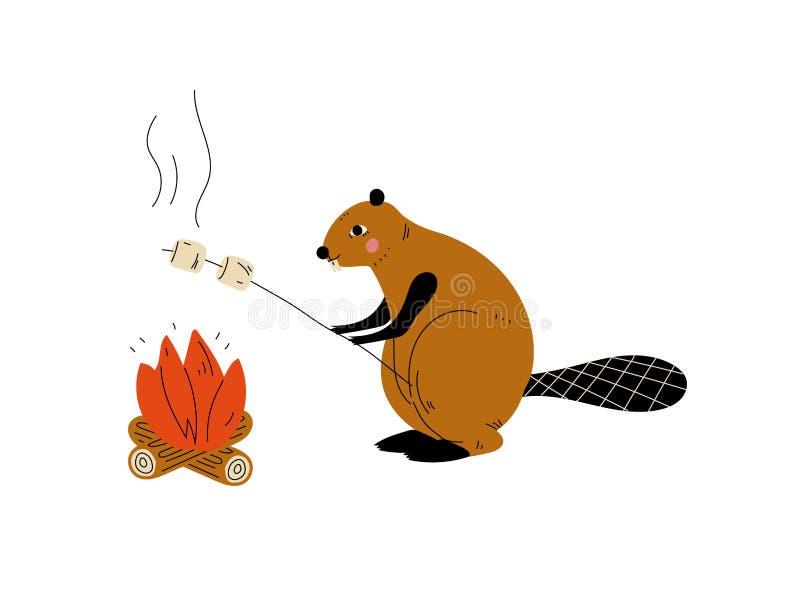 Marshmallows da repreensão do castor na fogueira, caráter animal que tem a caminhada do curso da aventura ou do vetor da viagem ilustração royalty free