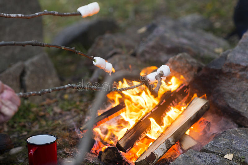 Marshmallows On Sticks Roasted Over Camping Fire stock photography