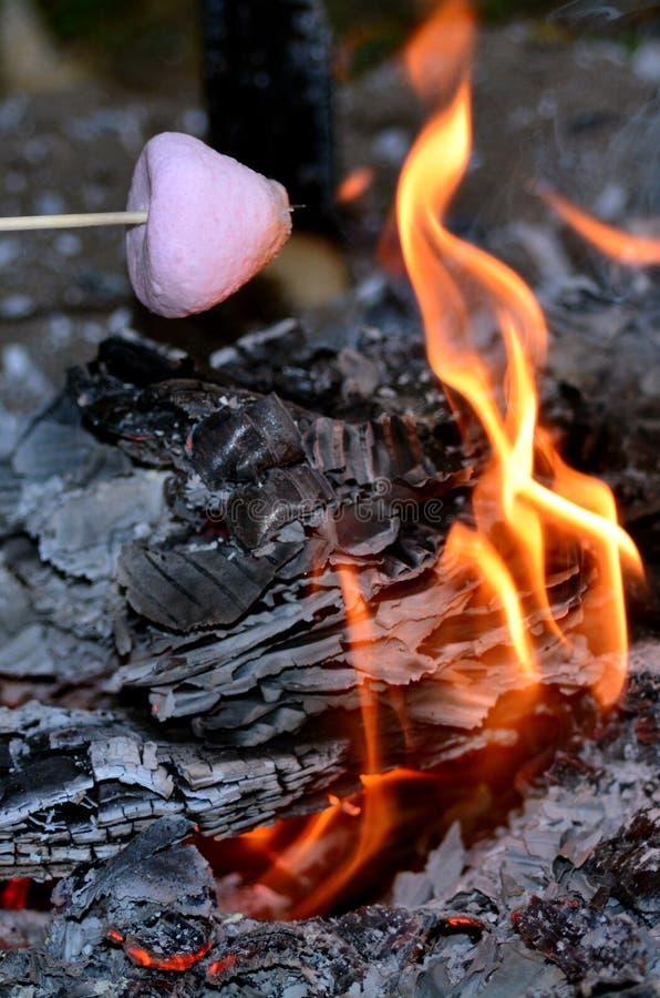 Marshmallowstek på lägerbrand arkivbilder