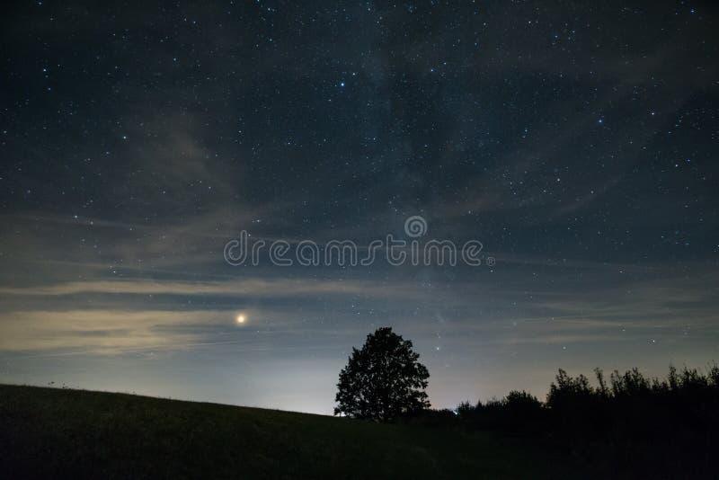 Marte y vía láctea detrás de la silueta del árbol foto de archivo