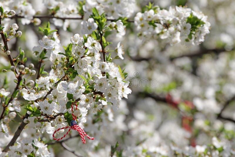 Martenitsa die aan een bloeiende boom wordt gebonden Martisor Baba Marta-vakantie stock fotografie