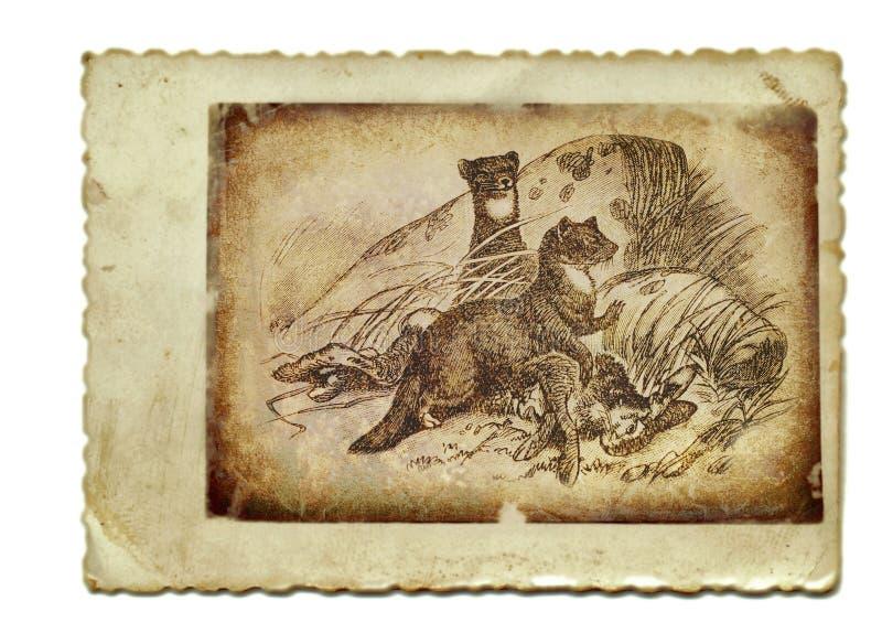 Download Martens stock illustration. Image of hair, atelier, animal - 23120642