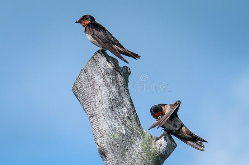 Martin Bird che si trova lungo la costa fotografie stock