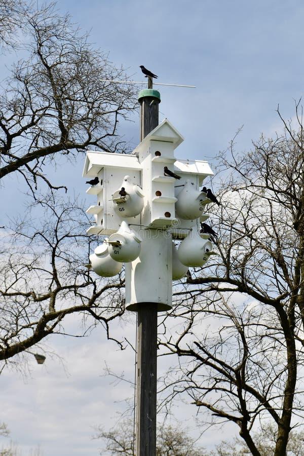 Martin Birdhouses pourpre photographie stock libre de droits