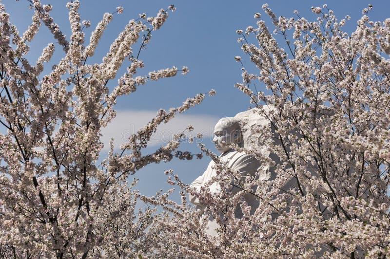 Martin Luther King Memorial met kersenbomen stock afbeelding