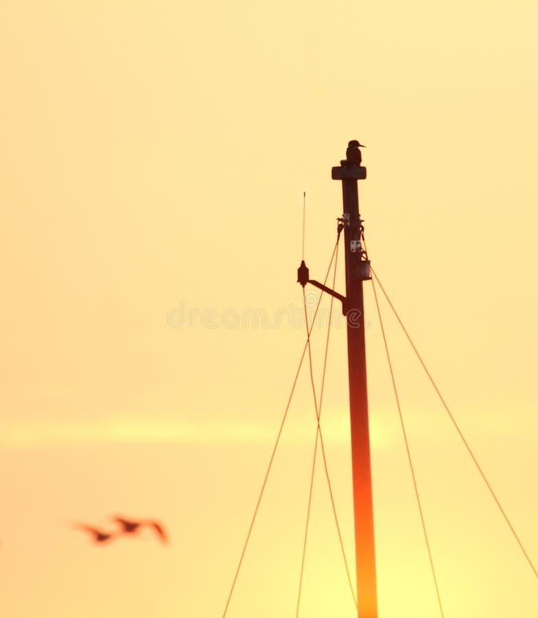 Martin-pêcheur sur le mât au coucher du soleil photographie stock