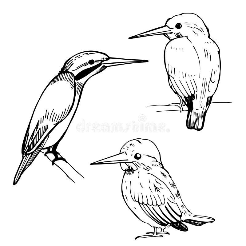 Martin pescatori disegnati a mano Illustrazione di schizzo di vettore illustrazione di stock