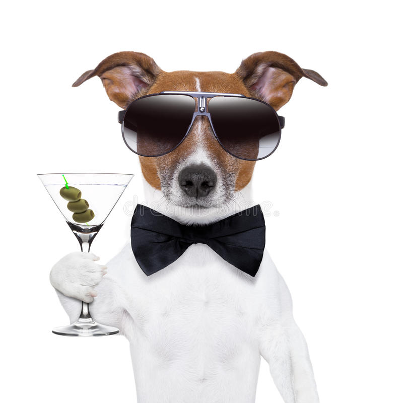 Free Martini Dog Stock Images - 29052464