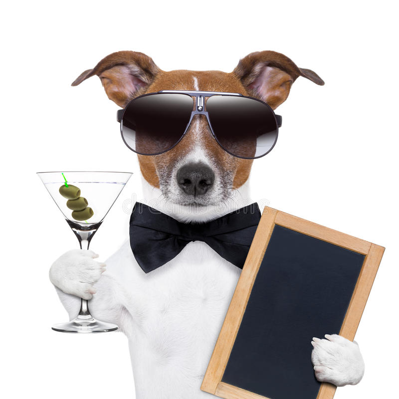 Free Martini Dog Stock Image - 31306351