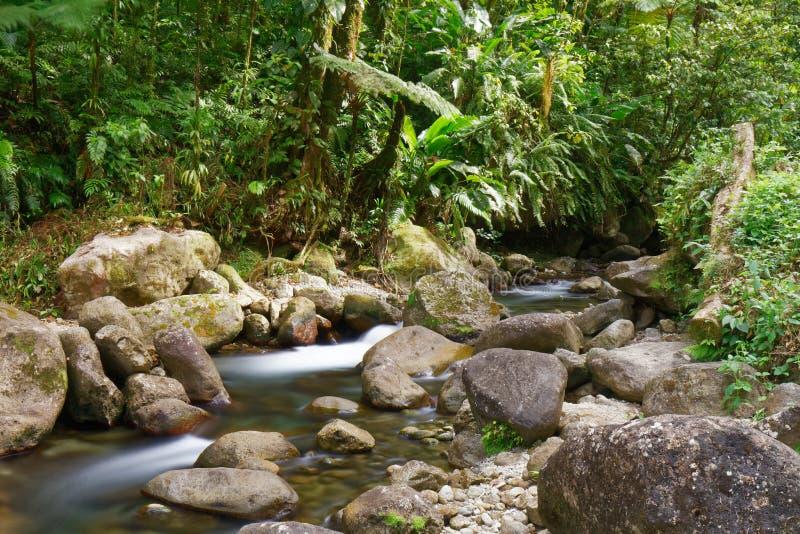Martinique, FWI - Alma river in Saint-Joseph. Long exposure royalty free stock image