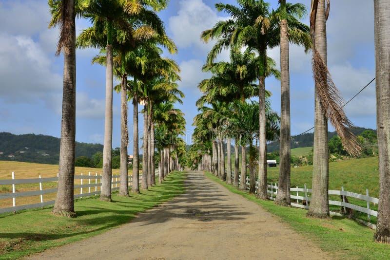 Martinique pittoresk stad av Riviere Pilote i västra Indies fotografering för bildbyråer