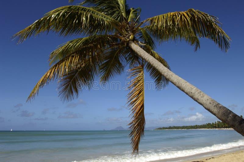 Martinique saltdamstrand i Sainte Anne royaltyfria foton
