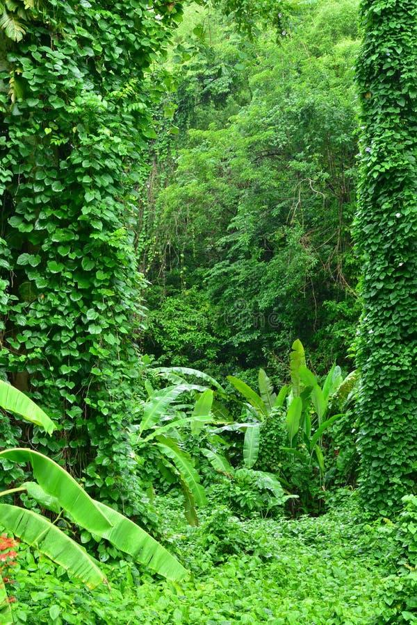 Martinique, schilderachtig tropisch bos in het dorp van Les Le royalty-vrije stock foto