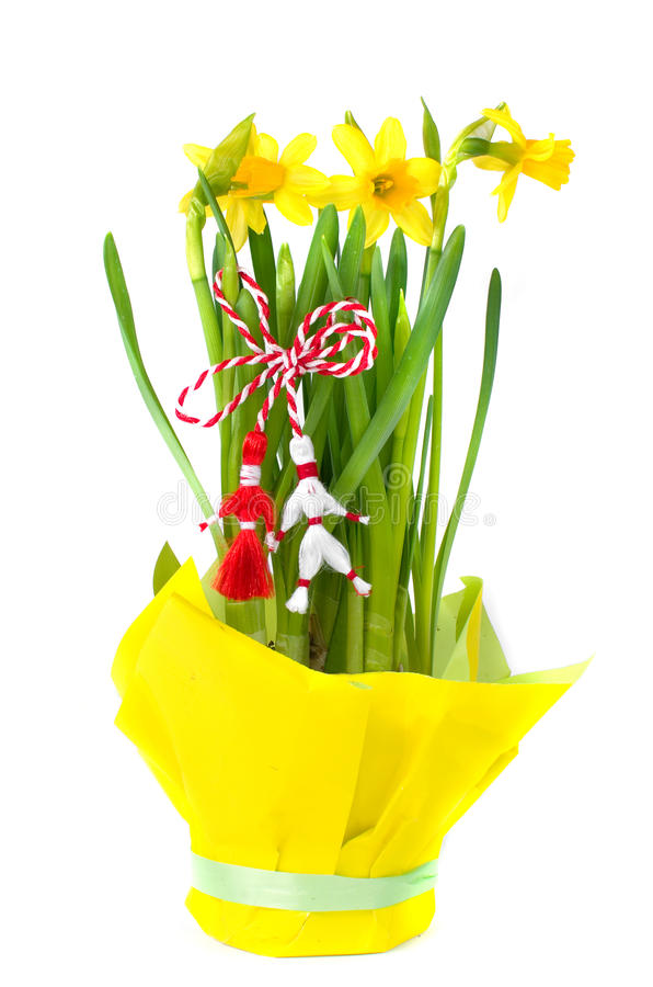 Martisor - Spring Holiday. Martisor is an old Romanian celebration at the beginning of spring, on 1st of March. Yellow daffodils isolated on white royalty free stock photos