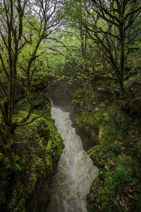 Martvili kanjon till och med lös skog royaltyfria foton