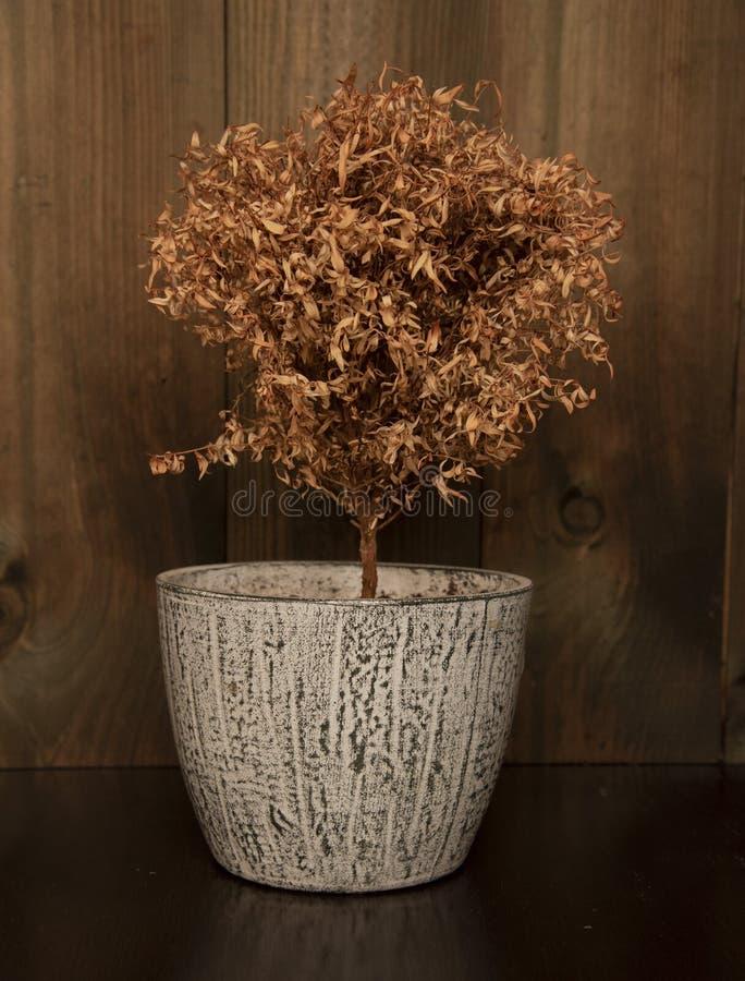 Martwe drzewo w ceramicznym dzbanku na drewnianym tle zdjęcia stock