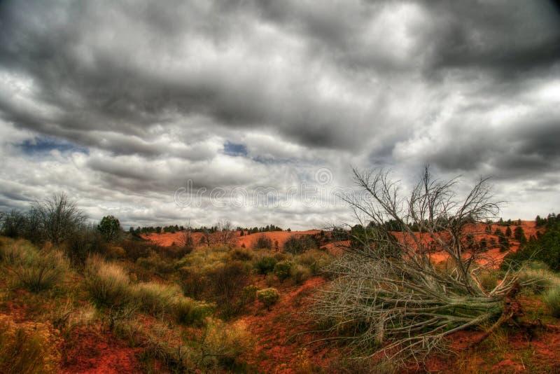 martwi diun sands różowego drzew fotografia stock