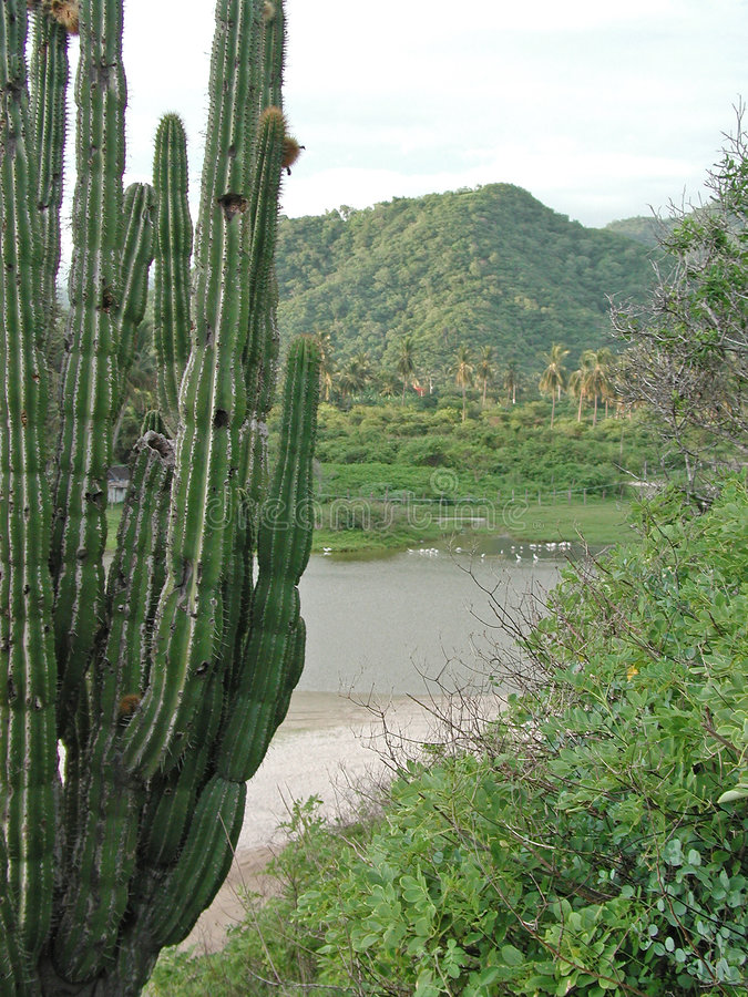 Download Maruata cactus stock photo. Image of green, leaf, cove, hills - 894