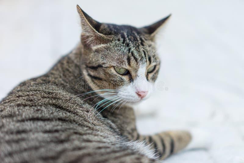 Marudny kota dosypianie na chodniczku w ranku obraz royalty free