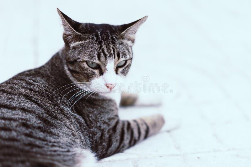 Marudny kota dosypianie na chodniczku w ranku obraz stock