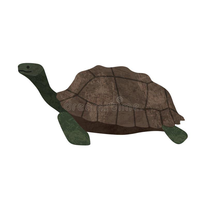 Marune χελωνών ζωικό γραφικό σχέδιο απεικόνισης εικονιδίων διανυσματικό διανυσματική απεικόνιση