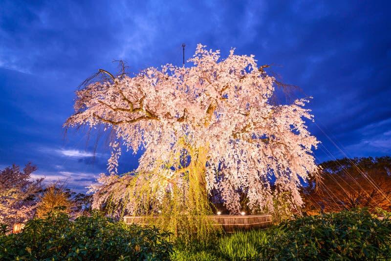 Maruyamapark in Kyoto royalty-vrije stock fotografie