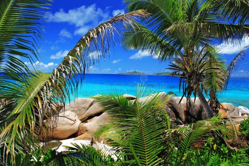 Marvellous Beach With Palm Trees Stock Photos