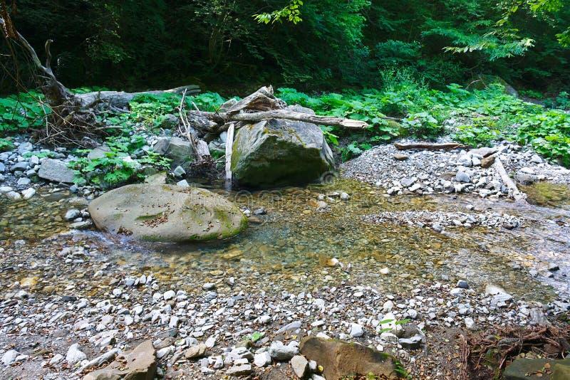 Marvellous bergliten vik bland sydliga skogar royaltyfri fotografi