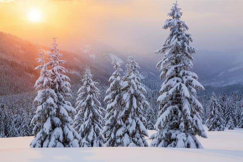 Marvelous winter sunrise high in the mountains in beautiful forests. Tourist scenery. Location place Carpathians, Ukraine. stock photography
