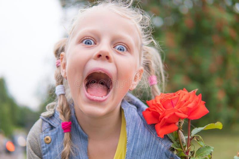 Marwelowana na piÄ™knÄ… czerwonÄ… różę, zabawna zdjęcia stock