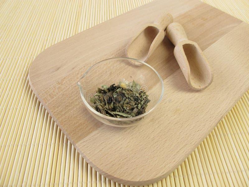 Mary thistle, Cardui mariae herba stock image