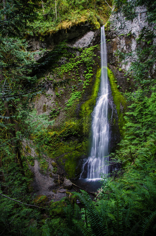 Marymere Falls in Washington State. Marymere Falls in Olympic National Park, near Lake Crescent royalty free stock photo