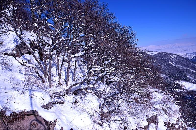 Marznięcia drzewo obrazy stock