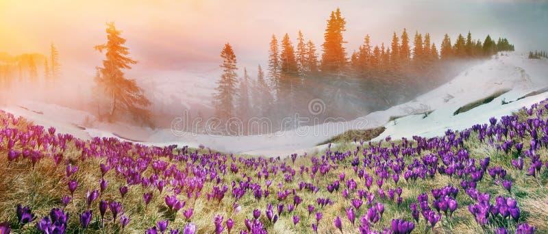 Marzo Carpathians immagine stock libera da diritti
