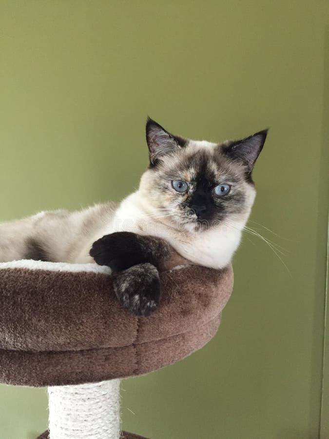 Marzyć kota obrazy royalty free