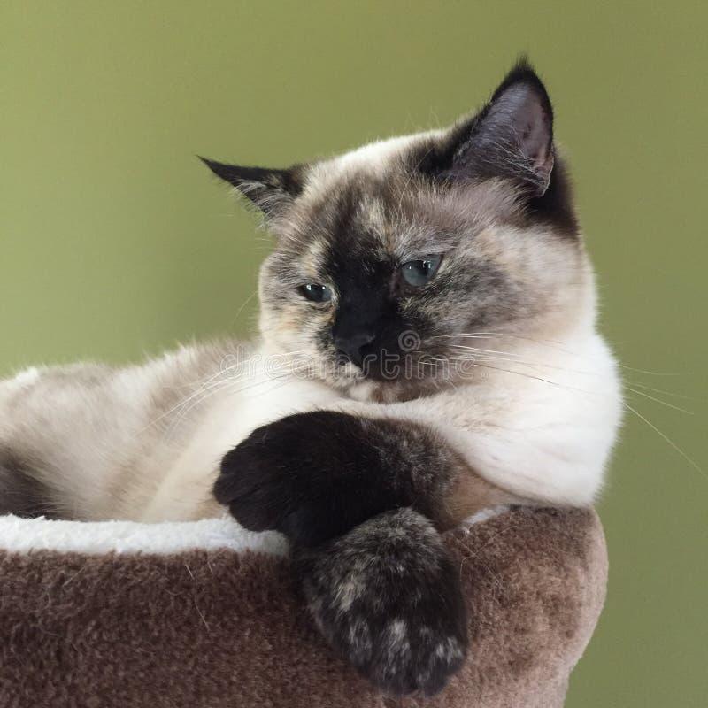 Marzyć kota fotografia stock