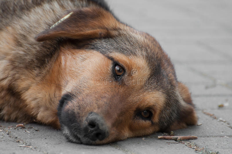 Marzyć włóczęgi psi odpoczywa patrzeć dobro obrazy stock