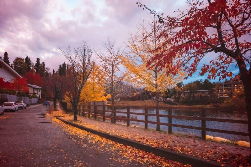 Marzycielska jesieni ulica z żółtymi drzewami przy Fujikawaguchiko, Japonia fotografia stock