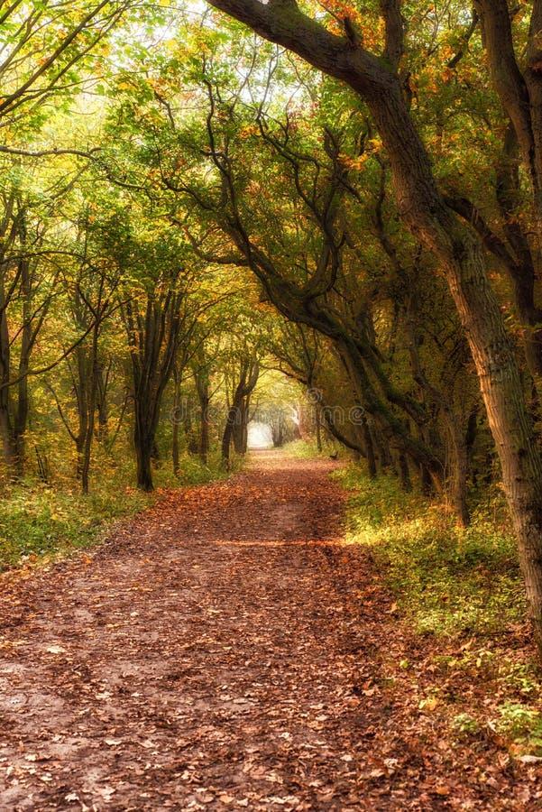 Marzycielska lasowa ścieżka obrazy stock