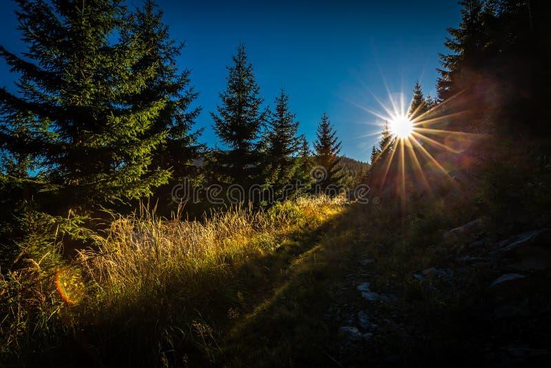 Marzycielska lasowa ścieżka z sunrays w zmierzchu w Jeseniky obraz stock