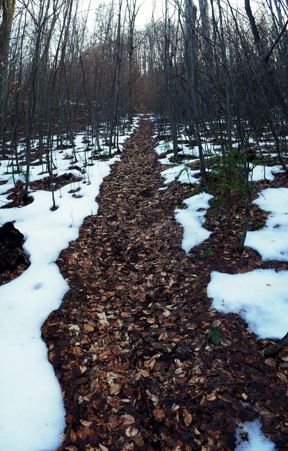 Marzycielski ślad w odwilży zimy lesie Ukraina obrazy stock