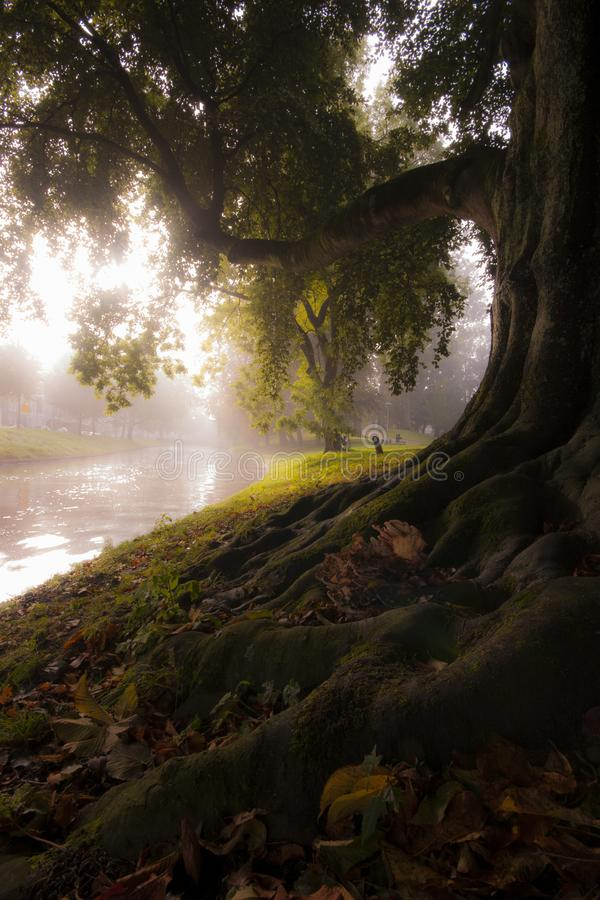 Marzycielski drzewo zdjęcie royalty free