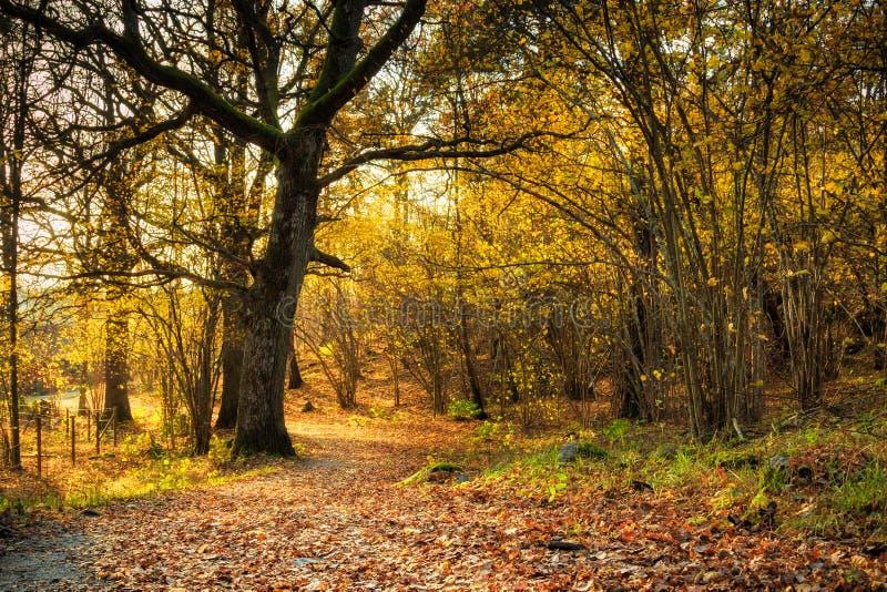 Marzycielski jesień dzień w lesie z ścieżką obraz stock